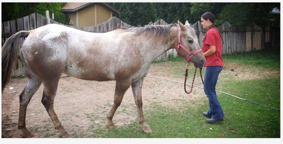 Horse-training blog post photo