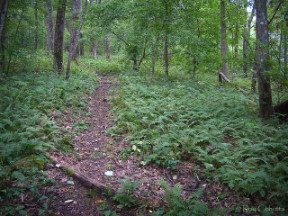 scent-trail-primrose-path-featured-image