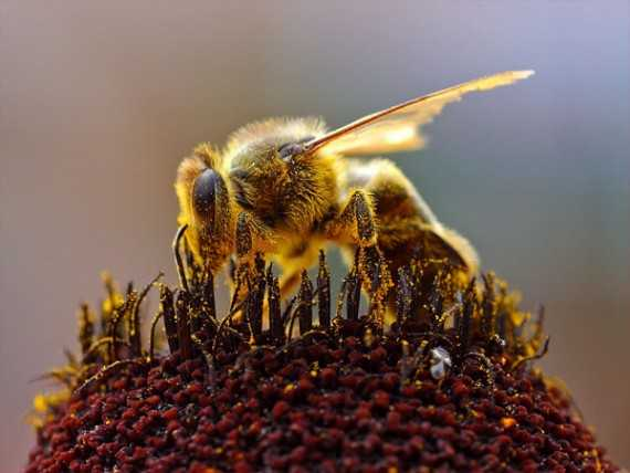 Writing about bees can be a sweet topic for content marketers.