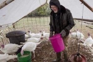 Image of a man feeding turkeys