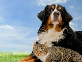 Image of a dog and cat