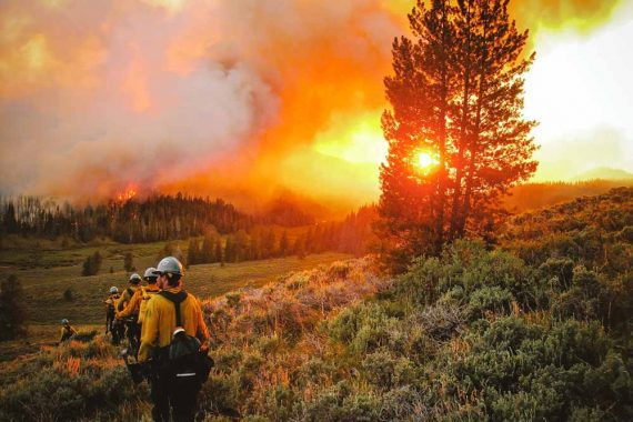 Photo of firefighters in a forest setting