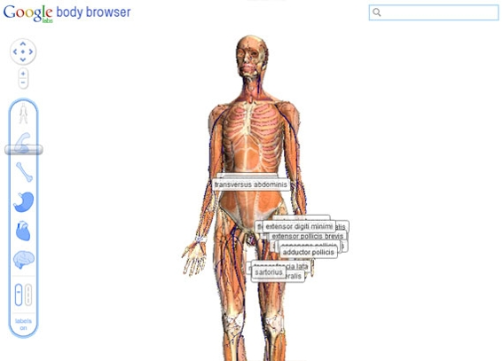 Google's Body Browser is an example of what can be done in the browser thanks to WebGL.