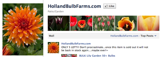 Holland Bulb Farms also features products in its photo strip.